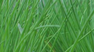 ФХ Нита Плюс предлагает выгодные цены лука на перо