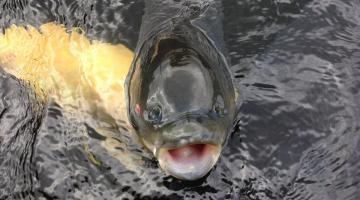 Неопытные рыбаки могут получить всю необходимую информацию в интернете