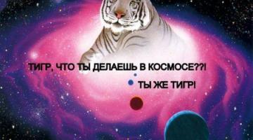 #чтиво | 6 легендарных животных-космонавтов