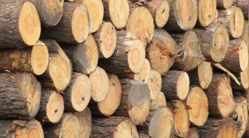 В Украине ужесточили наказание за незаконную вырубку леса и его контрабанду