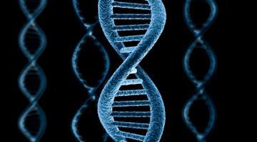 Генетики: Человек продолжает эволюционировать