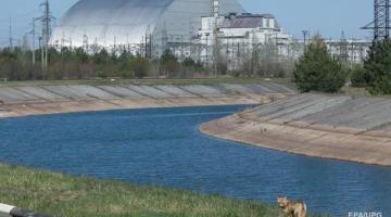 Даже медведи. Как природа возвращается в ЧернобыльСюжет