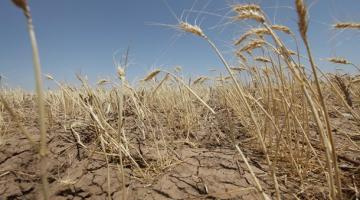 Украина без зимы. Что меняет глобальное потеплениеСюжет
