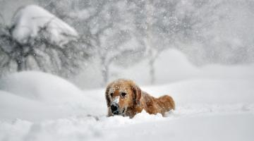 Холодная и снежная зима. Ла-Нинья меняет погоду Сюжет