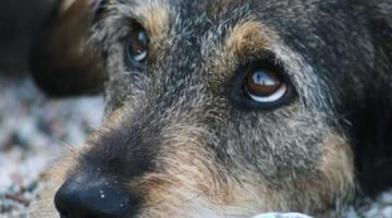 В Винницкой области собаку привязали к авто и тянули по улице