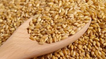 Після перемоги на тендері в Єгипті українська пшениця суттєво здорожчала