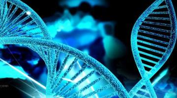 Ученые поняли, как работает «фермент бессмертия»