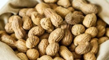 В Україні набирає популярності вирощування арахісу