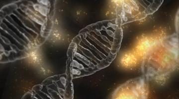 Биологи смогли включить «починку ДНК» в опухолевых клетках