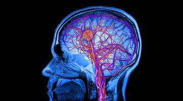 Как правильно тренировать мозг?