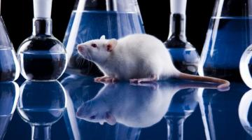 Ученые вернули парализованным крысам возможность ходить