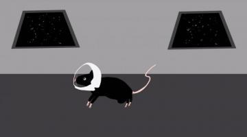 Зачем на МКС отправили двадцать лабораторных мышей?