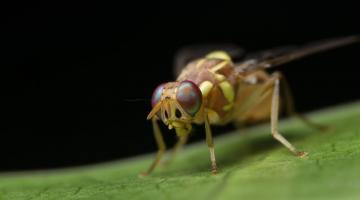 Секрет долголетия скрывается в микрофлоре и кишечнике