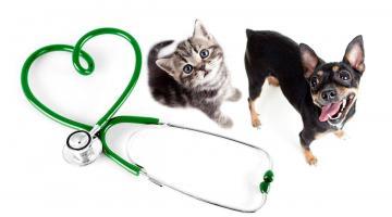 Профессиональный осмотр ветеринара каждые 6 месяцев - это должна быть норма